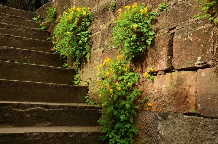 stairs-1404722_1920